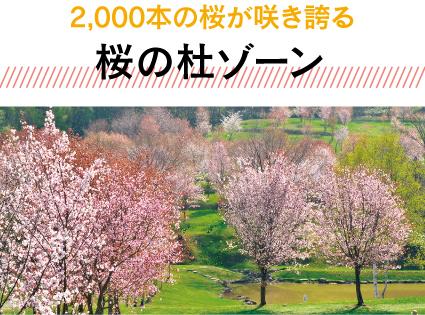 桜の杜ゾーン